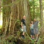 Ancient Cedars walk