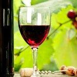 Gastronomía. Excelentes vinos.