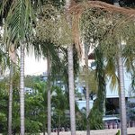 Trees in hotel compound