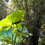 pool covered with lush plants