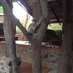 de aapjes lunchen gezellig mee