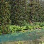 fish creek wildlife observation creek