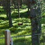 A deer - Photo taken from the veranda
