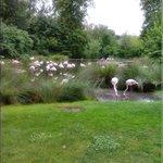 flamingo ' s