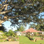 Fig Tree and accommodation