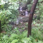 Water fall at Swan House!