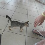 Little cutie that joined us at the snack bar. Lots of cats around!