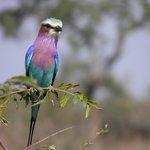 Beautiful birdlife