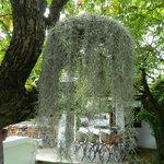 Cool flora