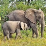 Elephant Mom and Baby at Sabi Sands