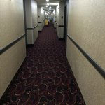Carpeted hallways