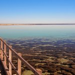 Stromatolite boardwalk