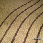 habria que limpiar o reemplazar las alfombras