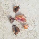 sea shells for sale