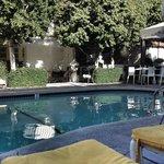 The Citron Pool