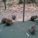 고양이 만한 쥐들이 공원안에 돌아다니고 있었다.