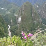 Machu Picchu orchid -Peru  is Diversity