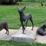 cães xoloitzcuintli, sem pelos, raça adorada pelos astecas.