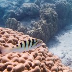 Snorkeling between Motus Tiahura and Fareone
