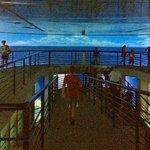 サメの展示コーナーは螺旋状に移動していきます