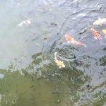 Nice fish :)