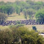 Wonderfull wildebeest experience.
