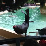 Well-rehearsed sea lions' and seals' show