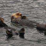Sea Otter Quest