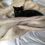 Resident black cat