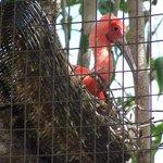 Ibis in nest