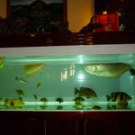 аквариум в холле