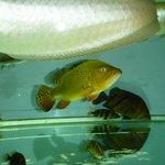 аквариум в холле3