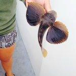 Sea Robin caught on the Bay Bee