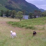 View of Buttermere Lake