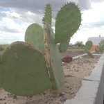 Check in and cacti