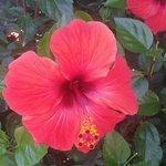 Una delle tante specie di fiori presenti nel giardino