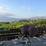 2nd Vineyard- amazing view!