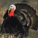 National Wild Turkey Federation Wild Turkey Center