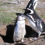Penguins from the nearby penguin island tour