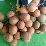 Pitomba,fruta típica.