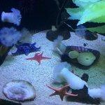 loved the aquarium