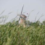 De Zwaan off in the distance through the fields.