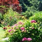 Blumenmeer in unserem Garten