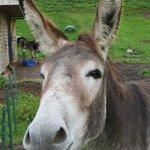 cheery donkeys