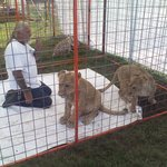 More pics of the lion cubs