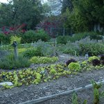Parkway's on-premise Organic Garden