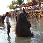 На пляже купают слонят
