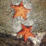 stelle marine in spiaggia