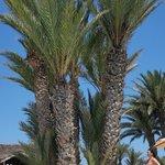De grands palmiers pour un peu d'ombre ! :)