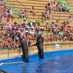 на Шоу с морскими животными!